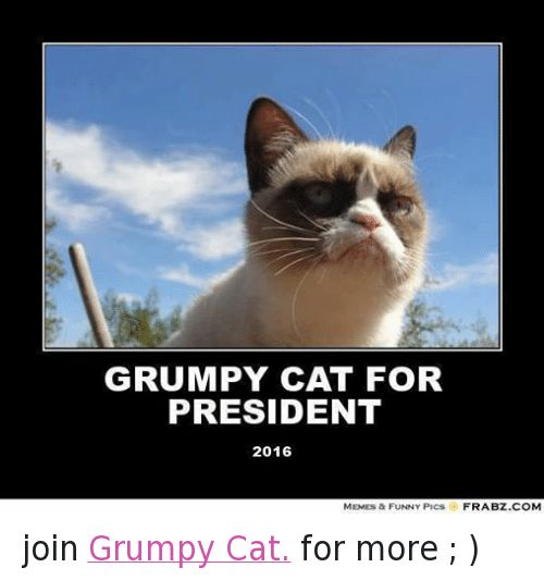 Cats Funny and Meme GRUMPY CAT FOR PRESIDENT 2016 MEMES & FUNNY PICS