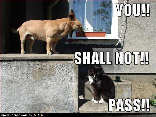 OU SHALL NOT Dog Puppy dog dog like mammal dog breed photo