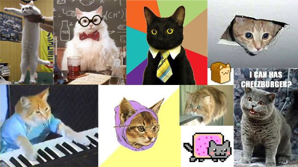 Cats populate just about every corner of the Internet from forums to blogs to social networks in the form of photos or videos or animated GIFs
