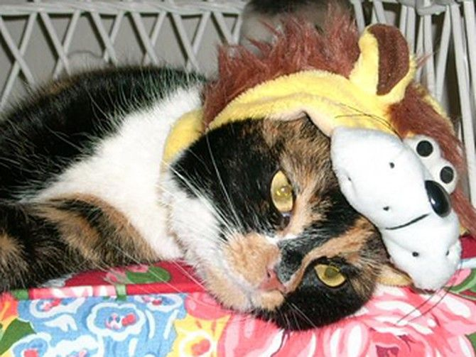 I got my cat Ulicka while I was living in Prague I didn t have the heart to leave her behind so when I came back to the United States Uli came with