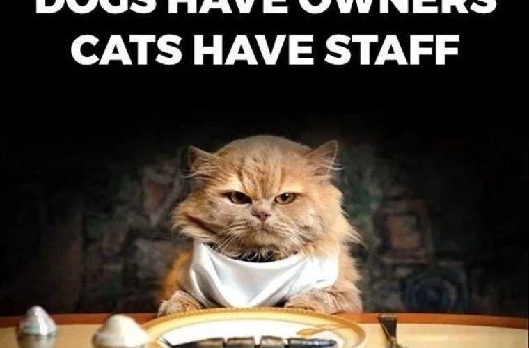 Owners vs Staff