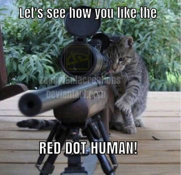 Gather the Wonderful Funny Sniper Cat Pictures