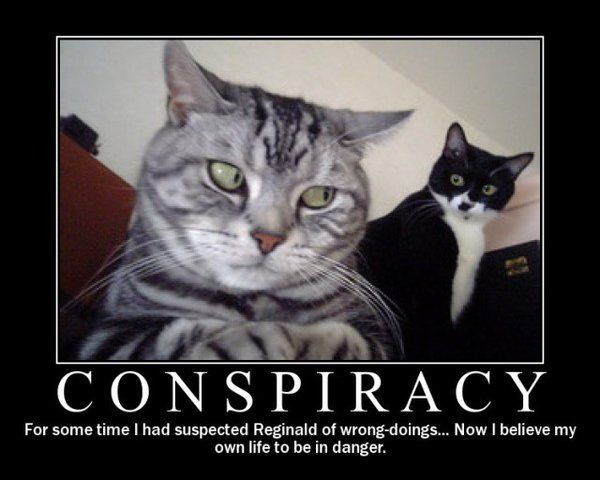 Funny cat conspiracy meme