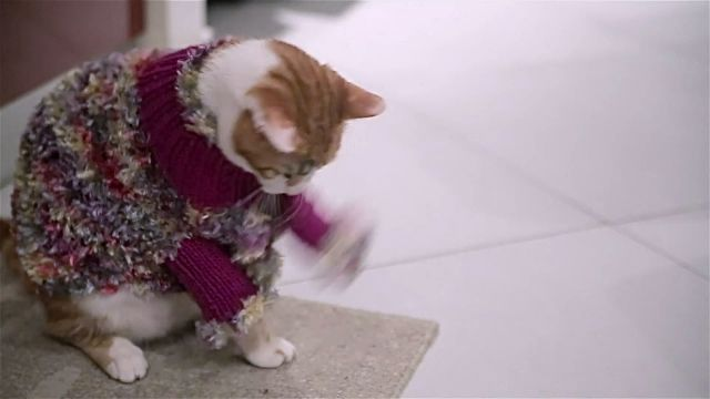 Too Cute And Very Funny Cat Trying To Take f His Clothes Stock Video & More Clips of Animal