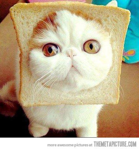 Nyan Cat s distant cousin…