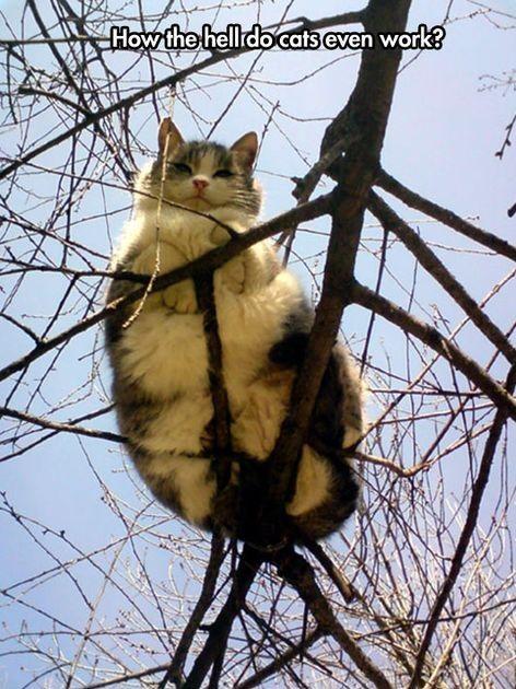 funny cat tree work