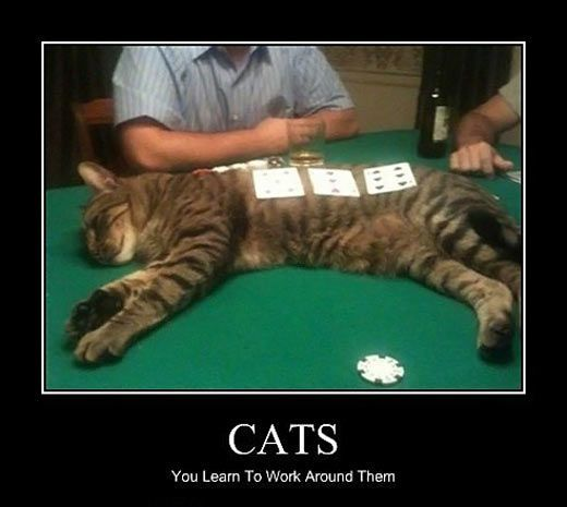Deal with it humans… To WorkFunny CatsFunny