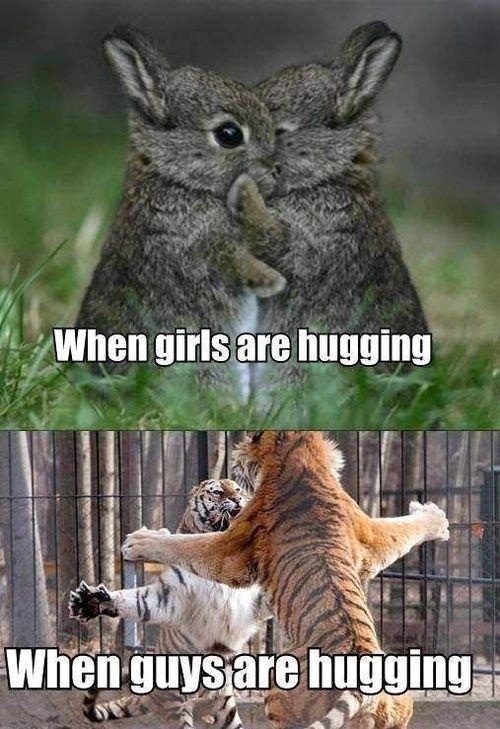 Funny Animal Jokes Hilarious Animal Memes Funny Guy Memes Funny Easter Memes