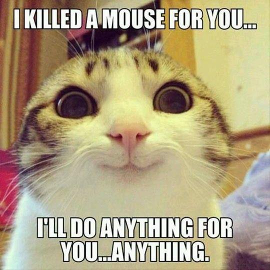 Wirecutter s obsessed girlfriend got a cat