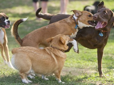 Things to Know Before Going to the Dog Park