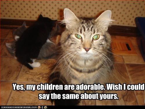 c d c05cf7f2cd a08c cats funny sayings funny qoutes