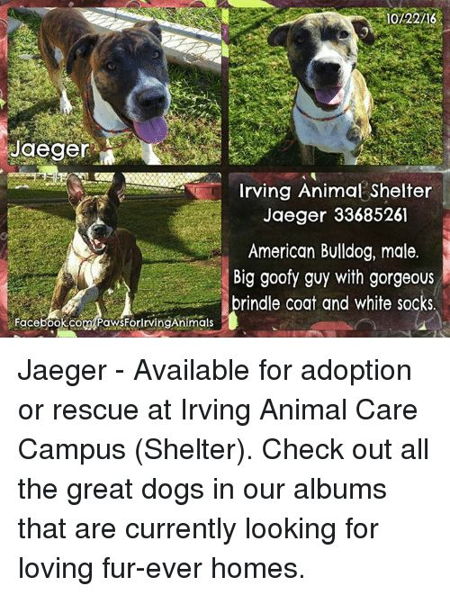 Animals Love and Memes 10 22 16 Jaeger Irving Animal Shelter