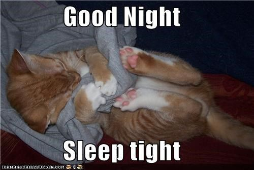 Get the Beautiful Funny Cat Goodnight Memes