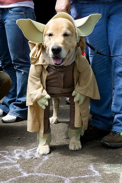 Yoda dog at UFO Fest McMinnville OR