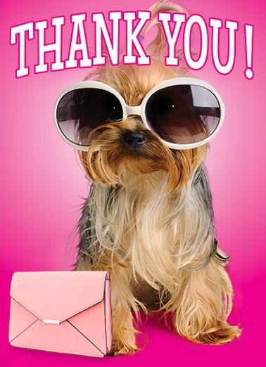 Funny Thank You Card sunglasses purse dog cute fun thanks thank you fashion That was TOTALLY FABULOUS of you