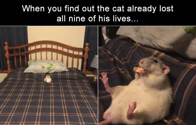 Funny cat memes for real cat lovers