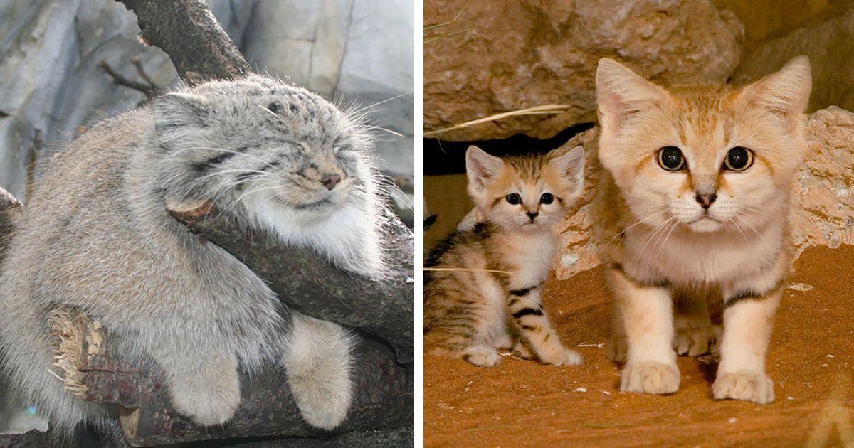 unusual wild cats fb