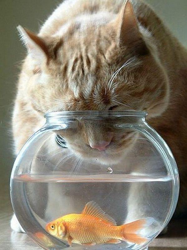 10 Cute Cats Fishing For Fish shared via SlingPic