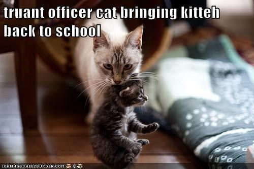 Get the Best Of Funny Cat Pictures Back to School