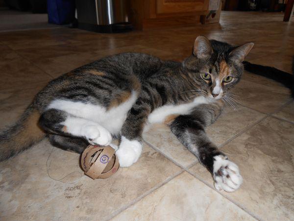 11catster ring ball 2