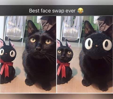 Cute Funny Animals Funny Cute Cute Cats Funny Memes