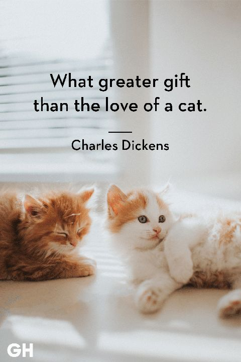 Charles Dickens cat quotes