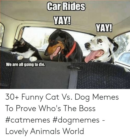 Animals Funny and Memes YAY YAY We are all going to