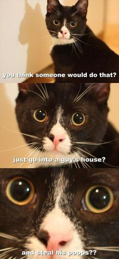 Funny Animal The Day – 17 Pics