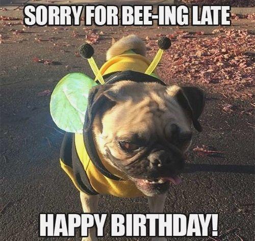 birthday girl meme dog