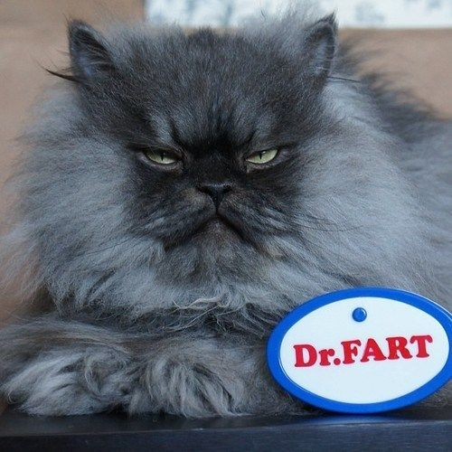 dr colonel meow funny fart