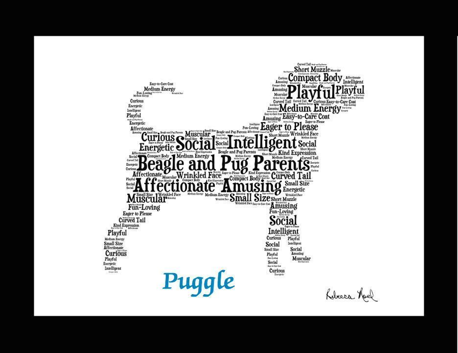 Traits of the Puggle If you are a pet parent or are shopping for a dog lover our pet portrait wall art makes an ideal addition to a dog lover s home s
