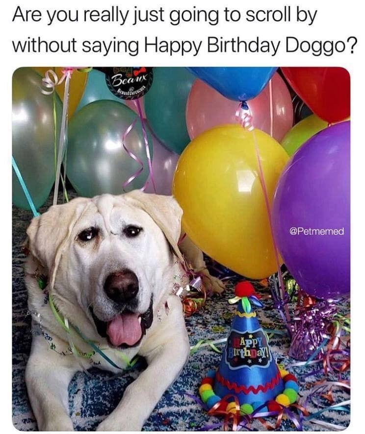 Get the Elegant Happy Birthday Memes Funny Dog