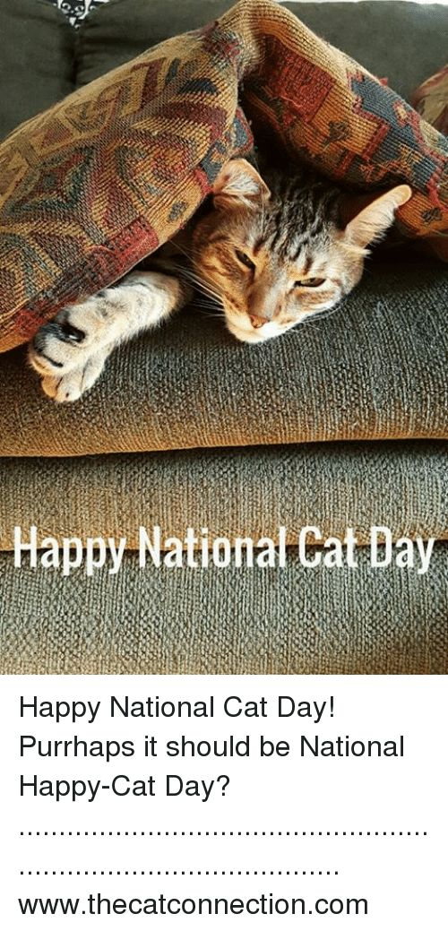 Memes 🤖 and Happy Cat Happy NationalCat Day Happy National Cat Day