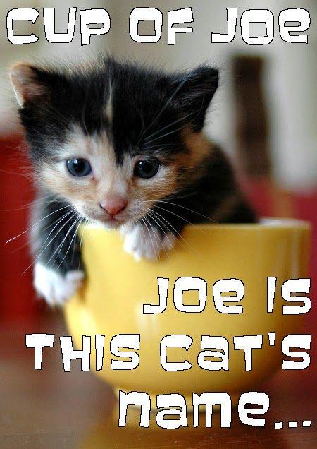 MEme of cat joe coffee