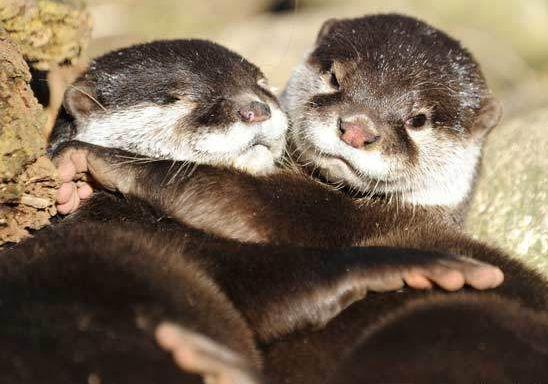 Look at them hug