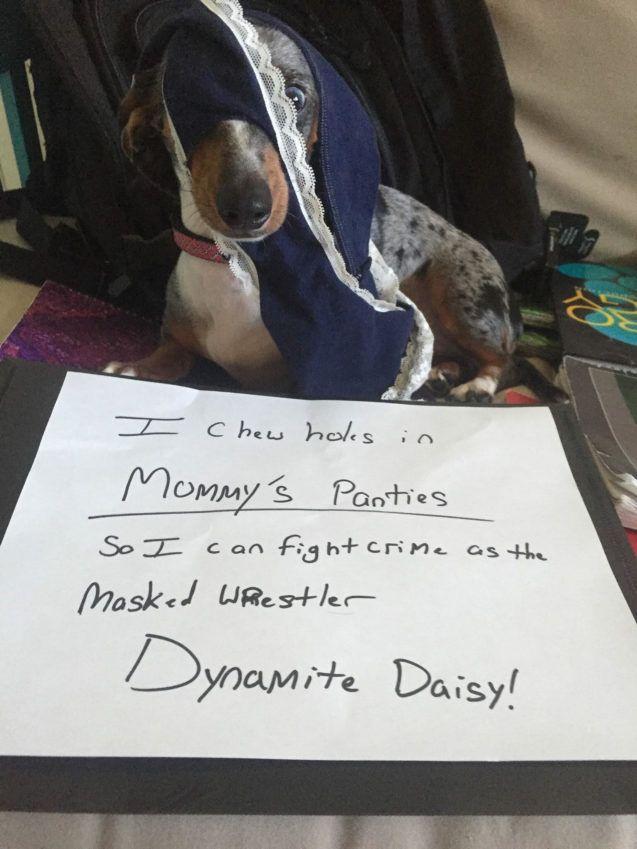 Dynamite Daisy Doxie Defeats Foes