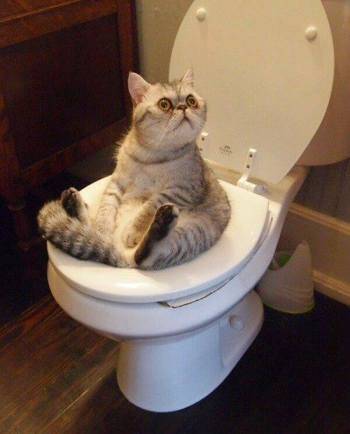 This cat hanging out on the toilet