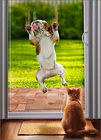 Bulldog Slides Down Sliding Glass Door Funny Humorous Cat and Dog Birthday Card