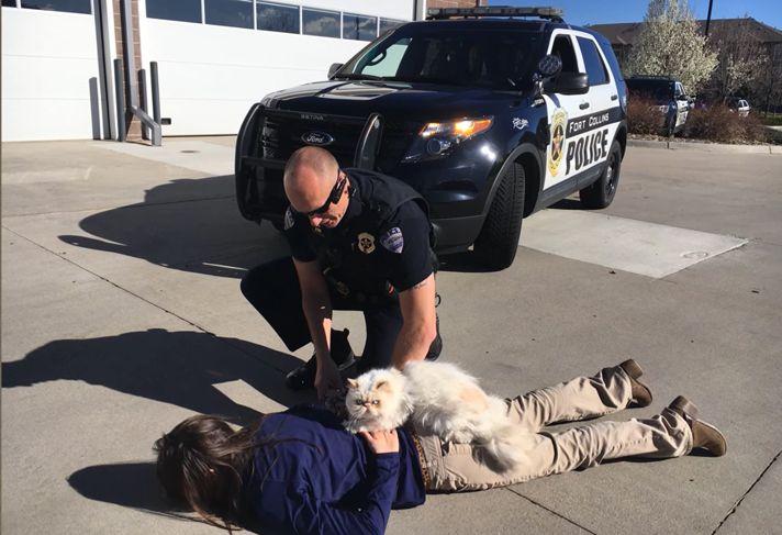 Cat Cop Apprehends Burglar As Part Hilarious April Fools Joke By Colorado Police