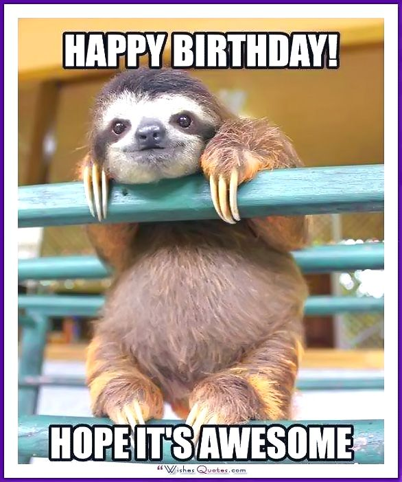 animal happy birthday images happy birthday memes with funny cats dogs and cute animals ideas