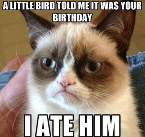 grumpy cat bird