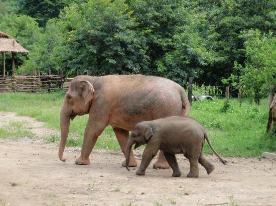 Elephant Highlands Package Review of Elephant Nature Park Chiang Mai Thailand TripAdvisor
