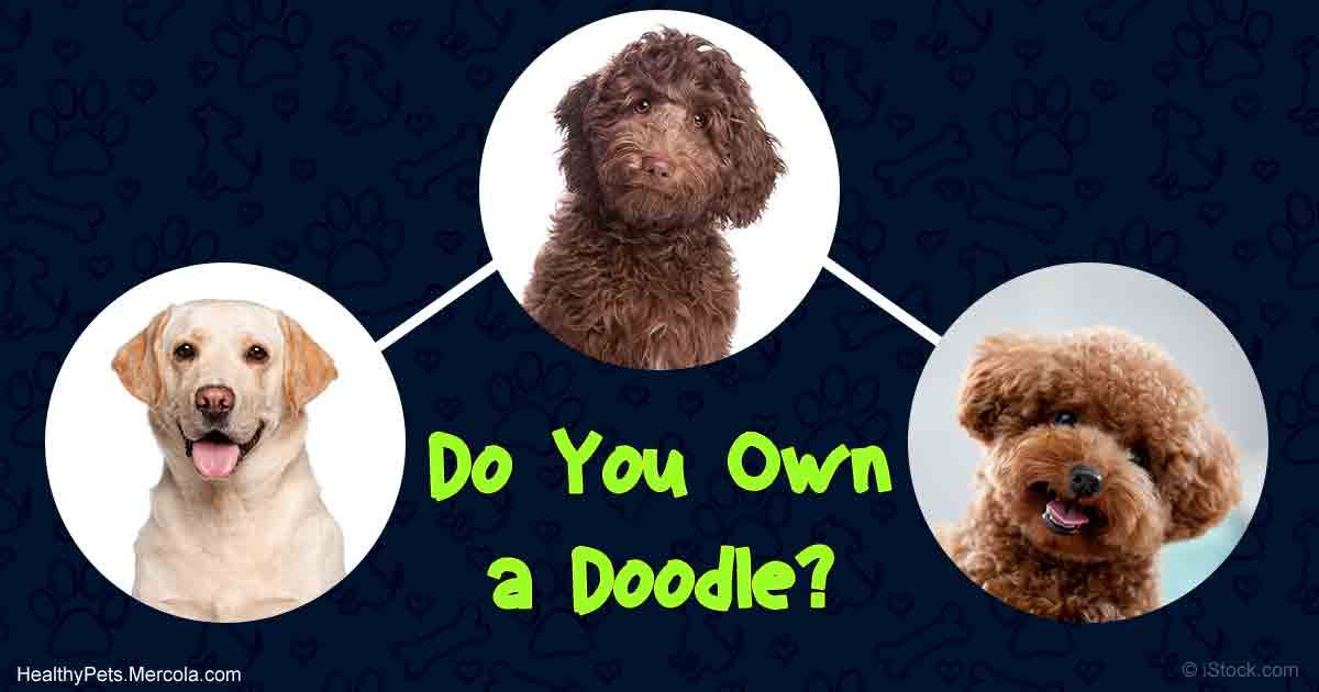 doodle dogs fb