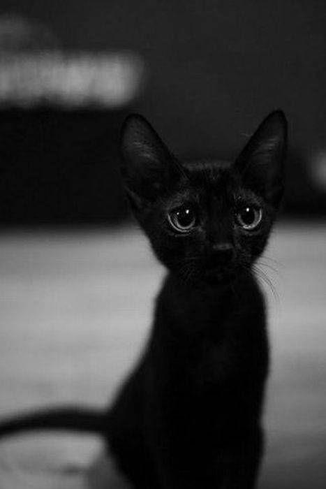 Best 25 Cute black cats ideas on Pinterest