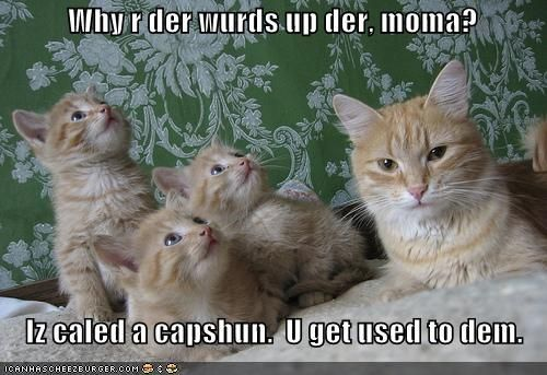 funny cats with captions captions funny kittens with captions funny kittens wi