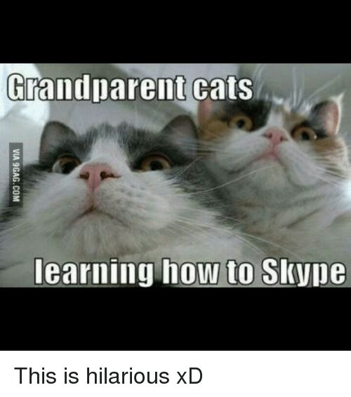 Cats How To and Hilarious Frandparent cats learning how to SkVpe This is