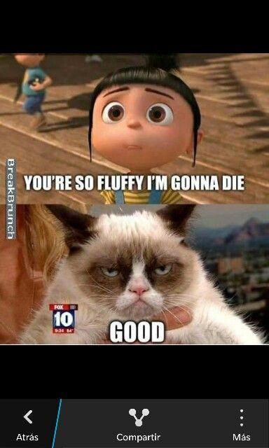 Jajajajajaja love grummpy cat