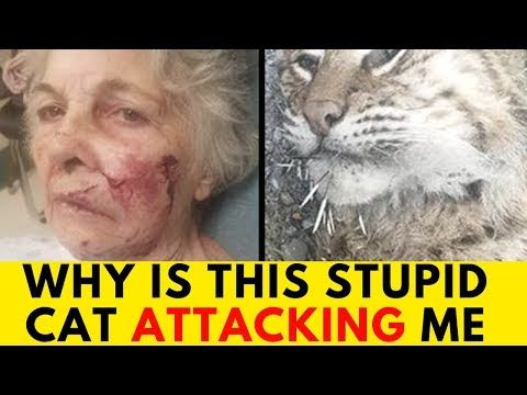 Brave 80 Year Old Woman Nonchalantly Faces Bobcat Why Is This Stupid Cat Attacking Me