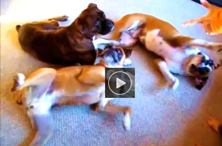 Funny video of Playing Dead Tricks by Dog