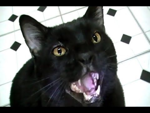 Talking Kitty Cat 23 5 Sylvester s Birthday